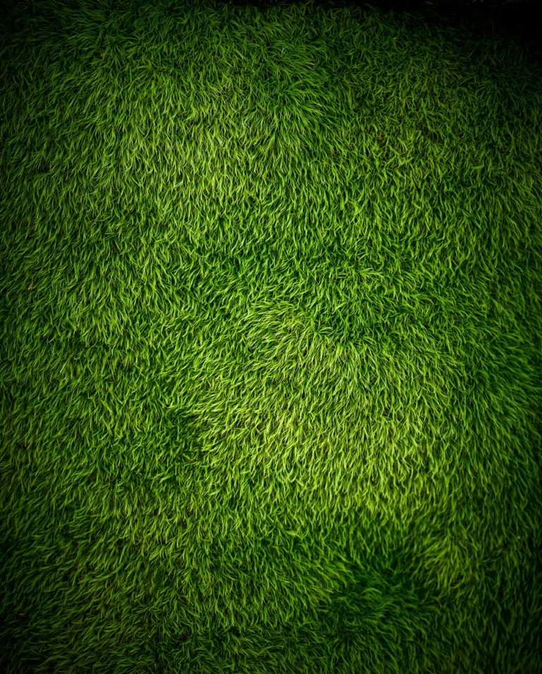 TJ Vissing Nature of Moss