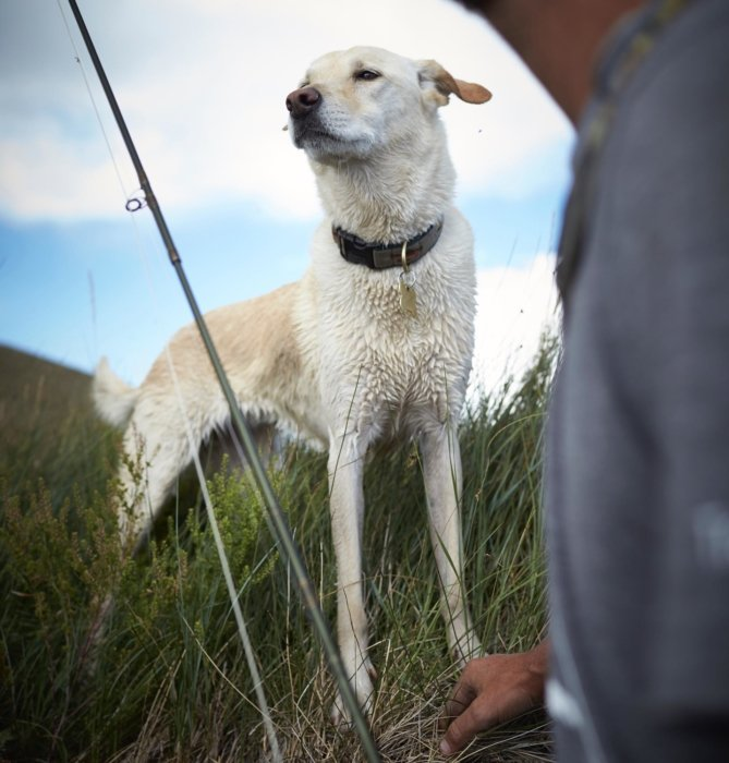 A fly fisherman and his dog