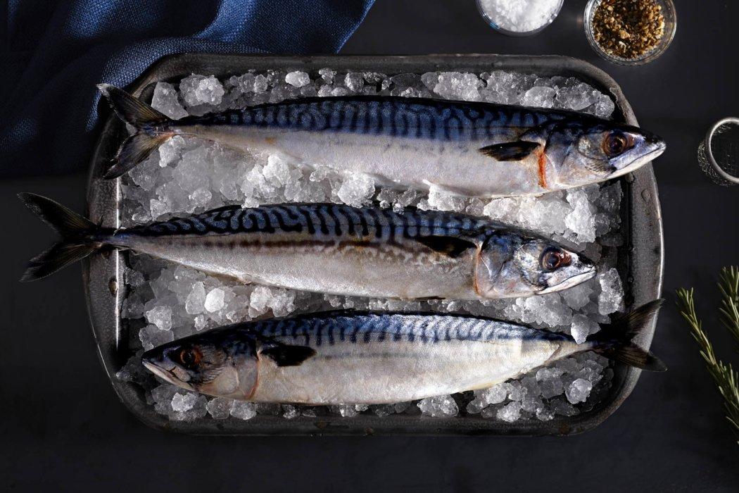 Three raw fish on ice