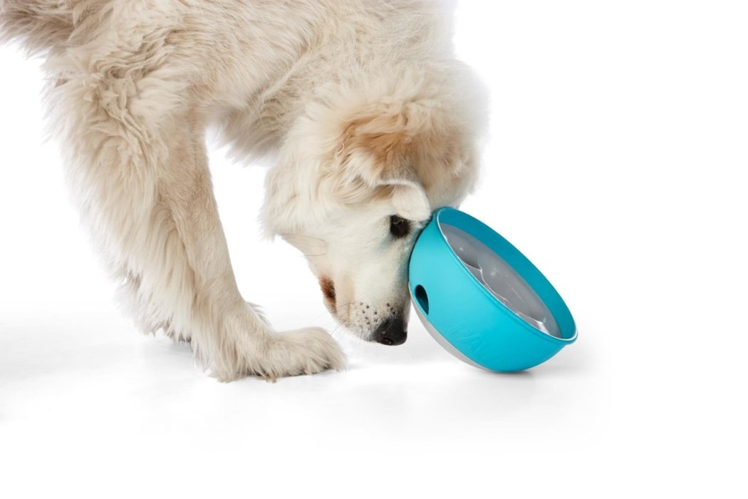 A white dog eating food Rock n' Bowl Ad Campaign