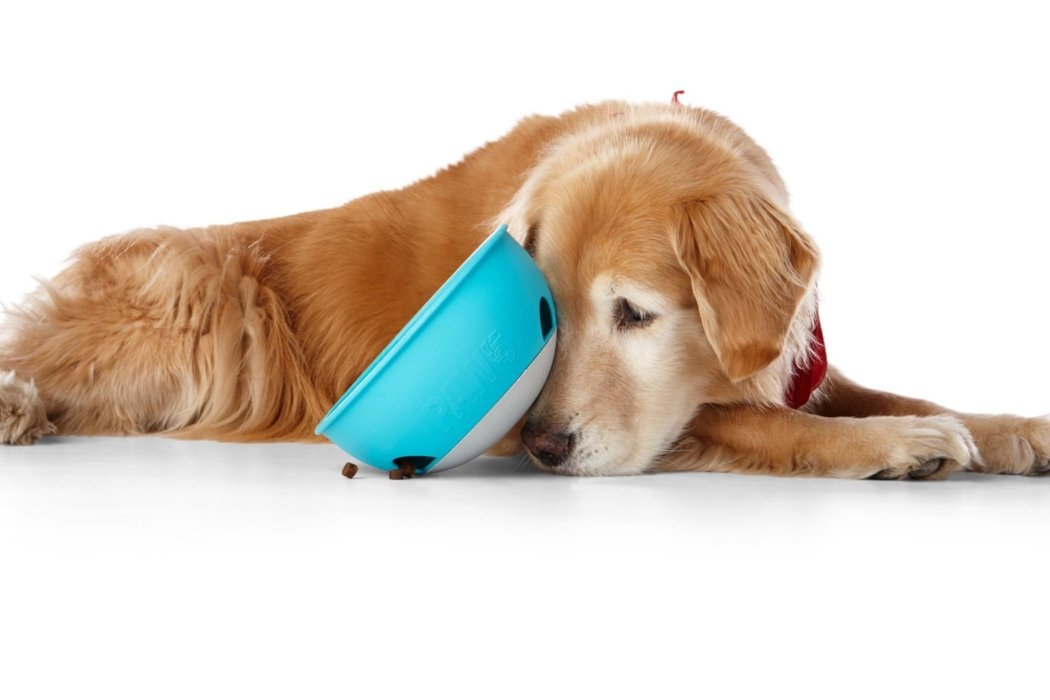 A dog lying with food bowl