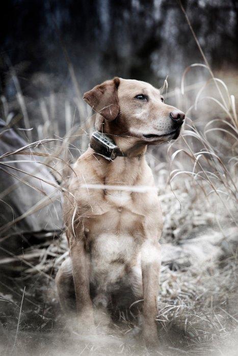 Monty Milburn outdoor photo of dog