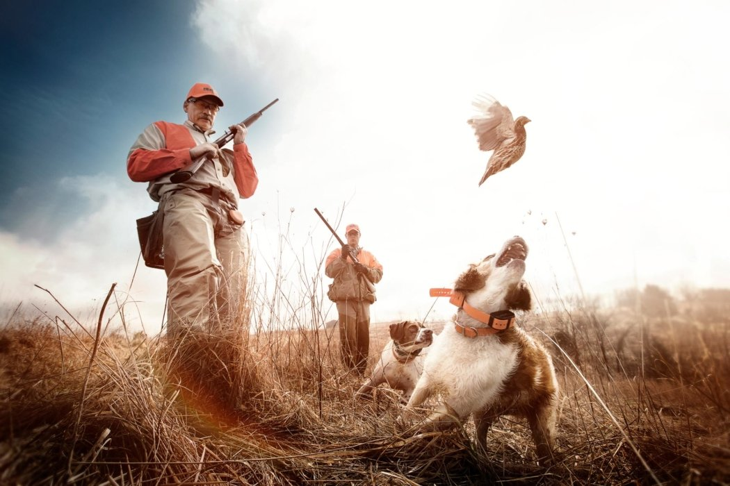 Action shot of dog and men hunting birds