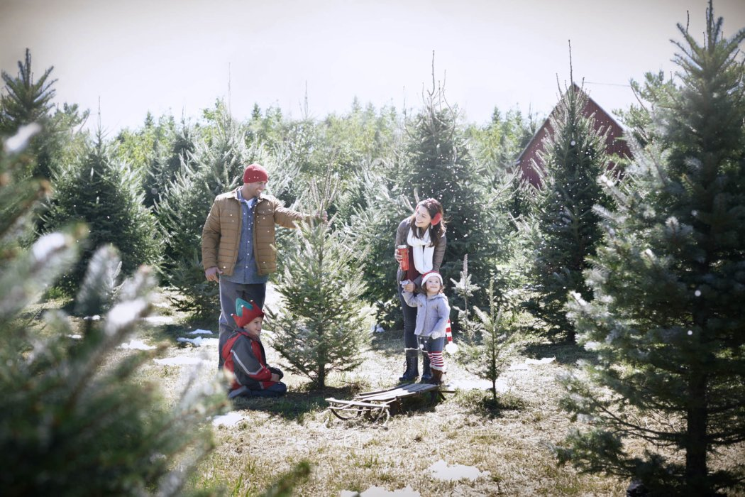A family picking a christmas tree