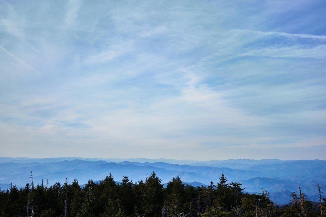 Big blue sky with pine trees