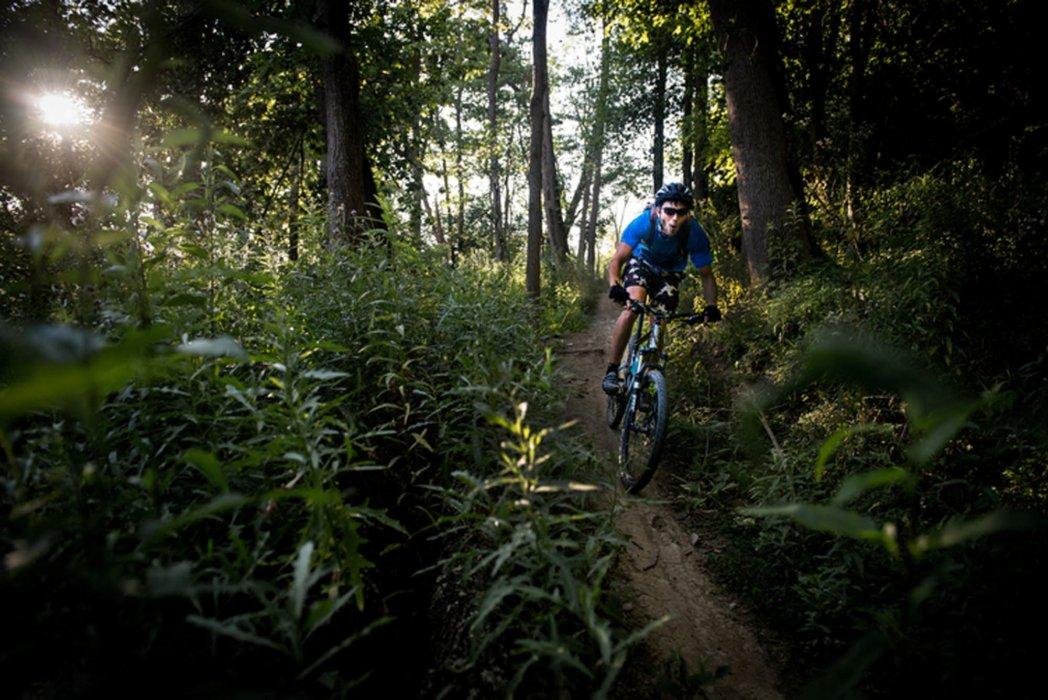 A cyclist riding through a thick wood on an off-road dirt bike trail