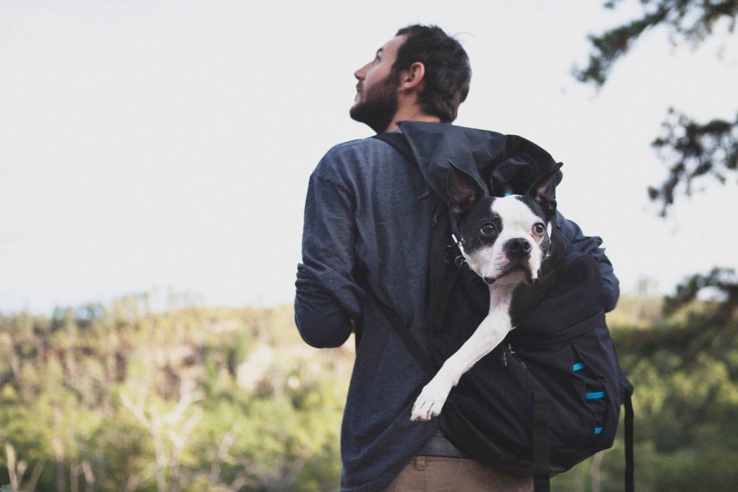 A hiker with a dog in his back pack