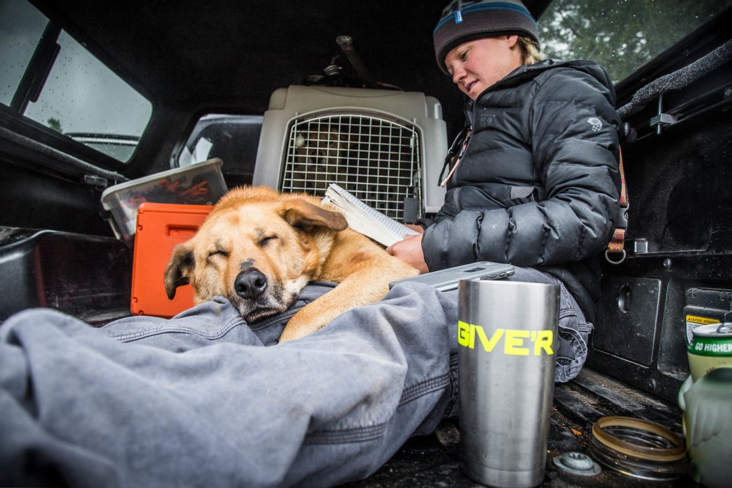 A woman and her dog in the back of a truck on a camping trip