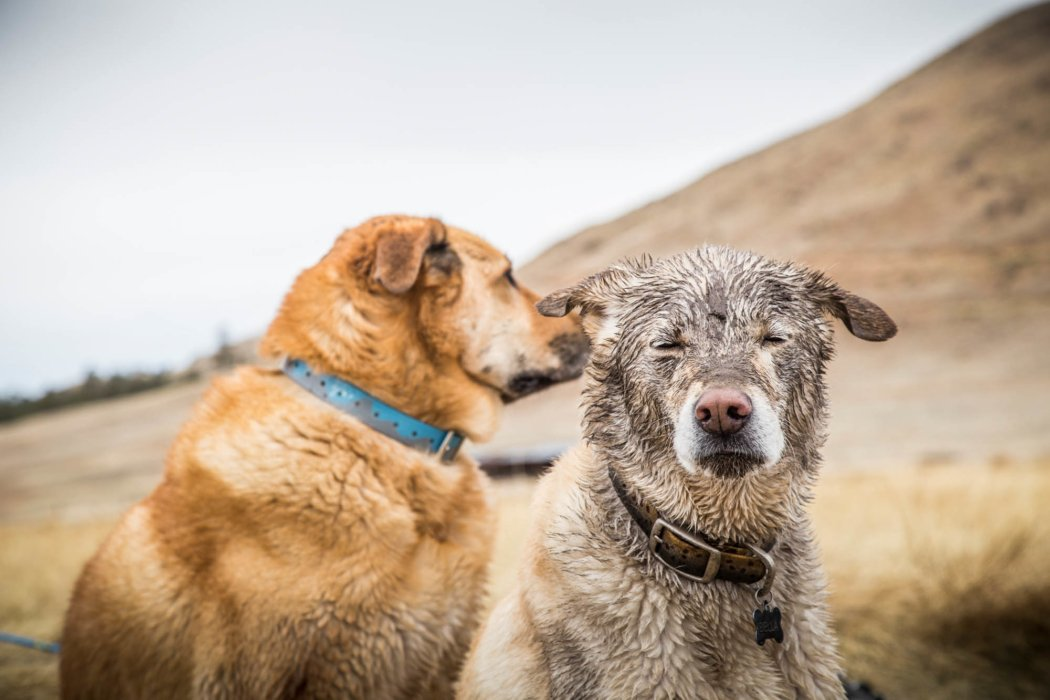 Two dirty dogs on a long hike - adventure photography