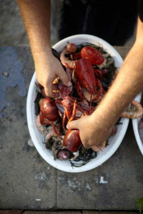 man pulling out a bucket of fresh red lobster food
