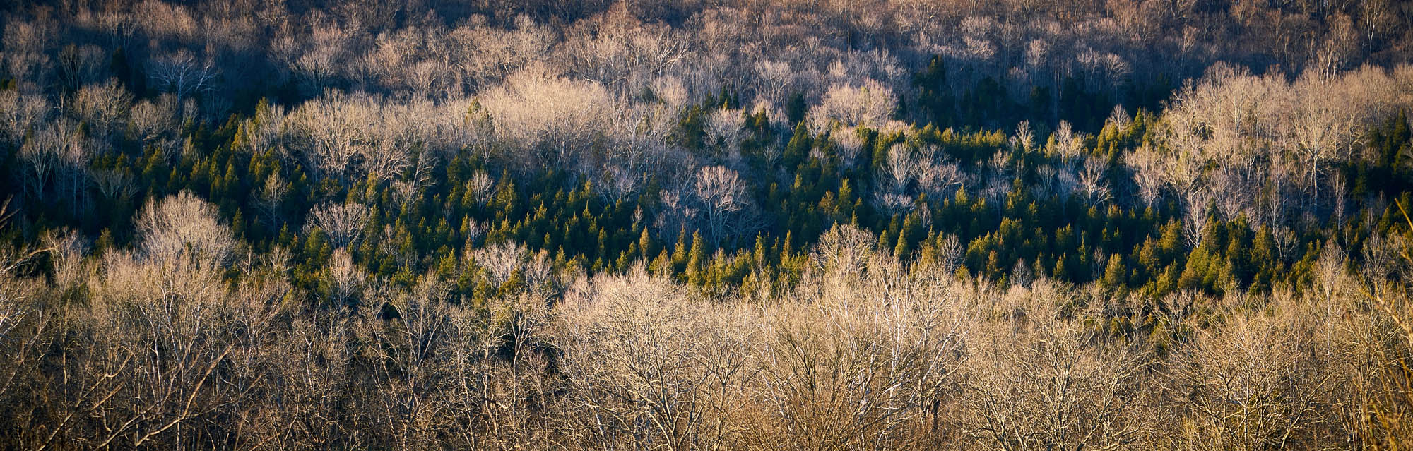 Landscape of tree in late autumn early winder - Nature Photography