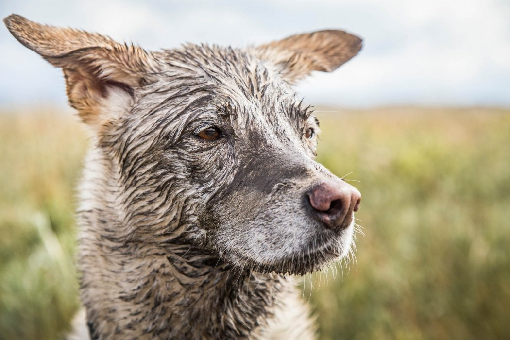 Photo of a dog outside and dirty in a field