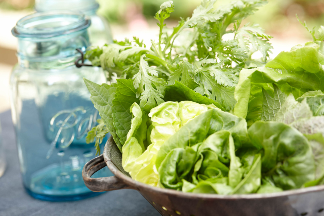 A bowl of fresh cilantro, lettuces, and herbs - Food Lifestyle Photography