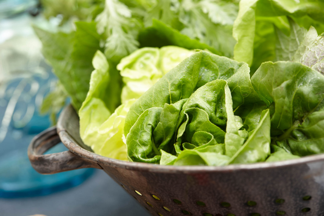A bowl of fresh cilantro, lettuces, and herbs alt - Food Lifestyle Photography
